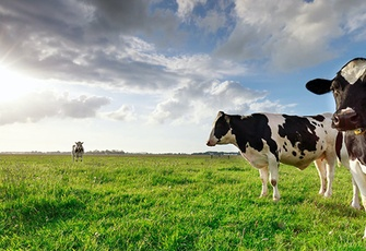 Sacred Cow: The Nutritional, Environmental and Ethical Case for Better Meat