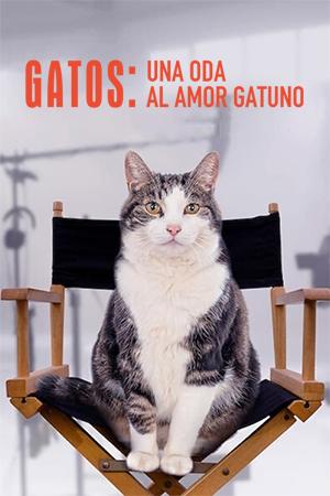 Gatos: Una oda al amor gatuno