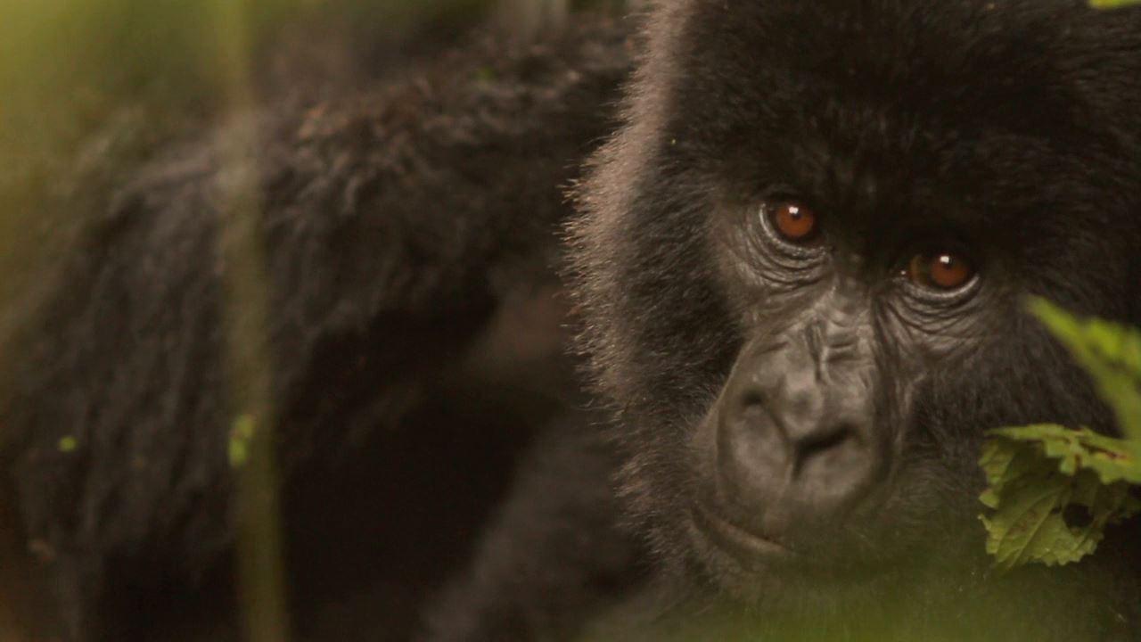 Cena de 'Virunga', documentário que será adaptado por Leonardo DiCaprio